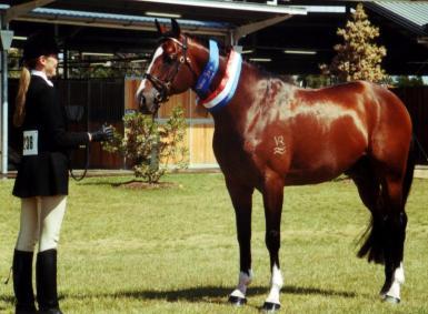 Arabian National Champion
