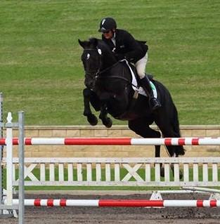 Proven talented Eventing or Dressage prospect