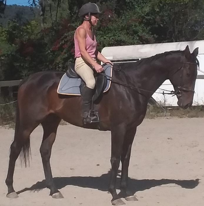 Ideal All-Rounder TB Gelding for Competitive Rider