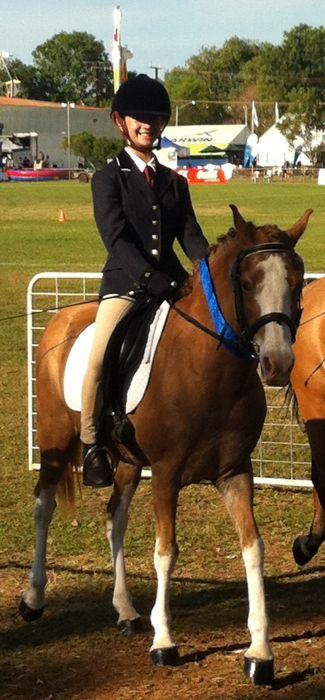 WAJASUE APACHE! 13hh Riding Pony