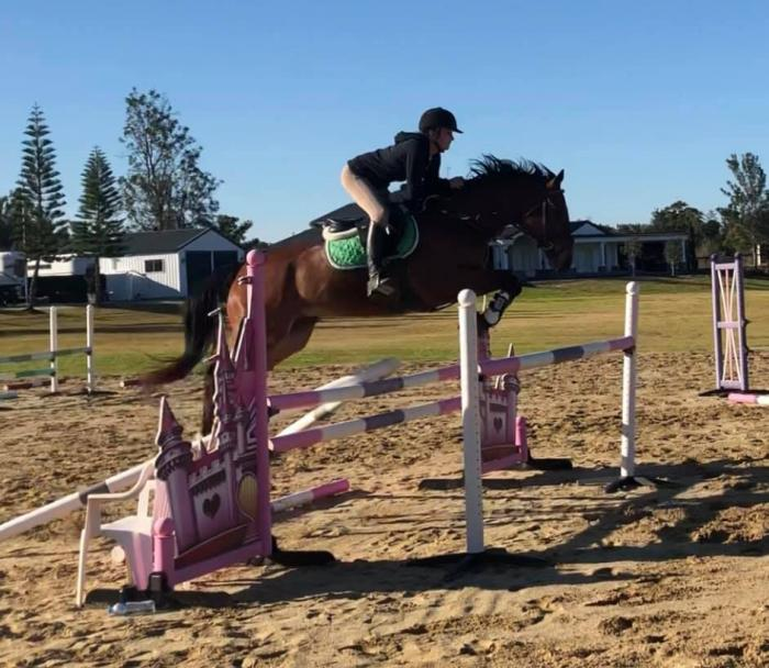 Showjumper with lots of potential. Cuddly as well