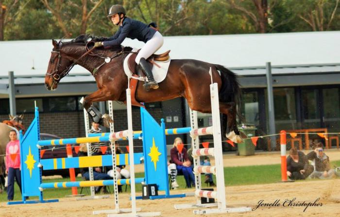 Serious 2* Performance Schoolmaster For Sale