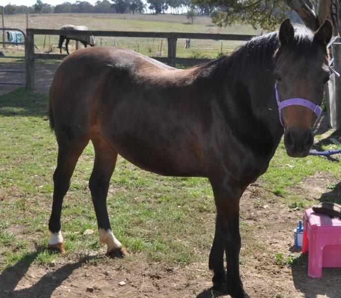 Lovely pony mare