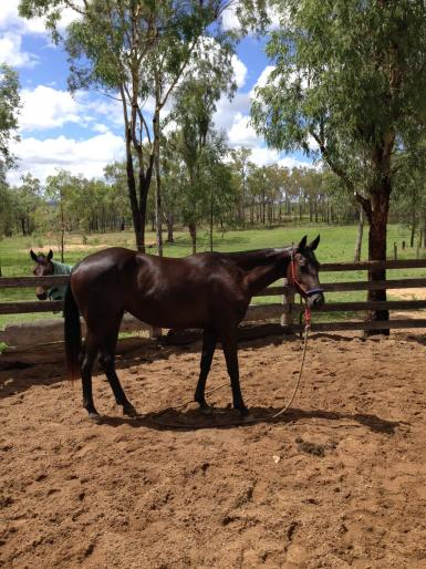 Filly by same Sire
