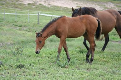 Grace's Filly March 2011 (2)