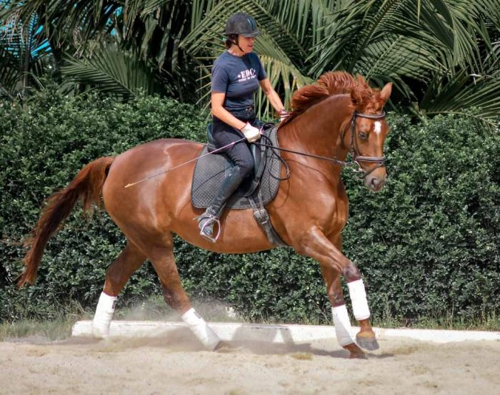 Beautiful Dark Chestnut Belissimo M mare