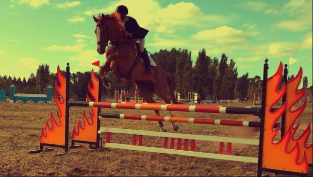Super Showjumper for a competitive rider
