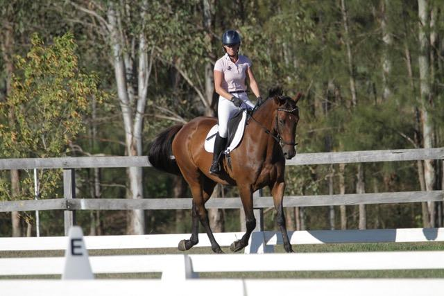 For sale or lease dressage or pleasure