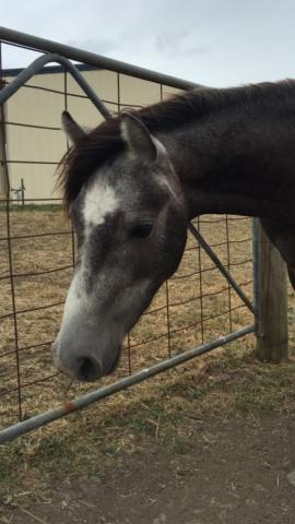 Pony dressage prospect
