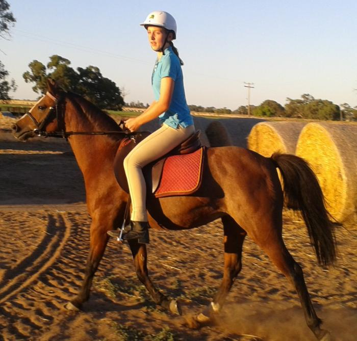 Great Allrounder Pony: Warranwood Trinket