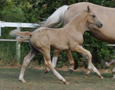filly by Belissimo M out of Daiquiri mare