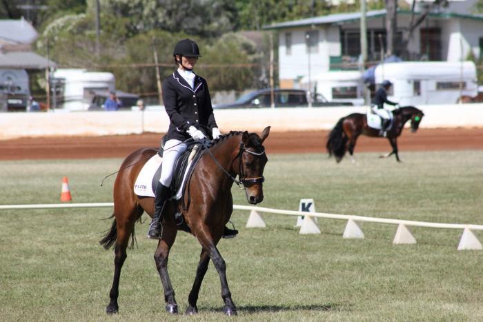 Versatile Stockhorse (HSH) Mare - Cleo