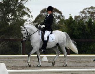 For Lease - Flash Dressage / Show Pony