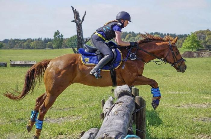Honest Talented Gelding