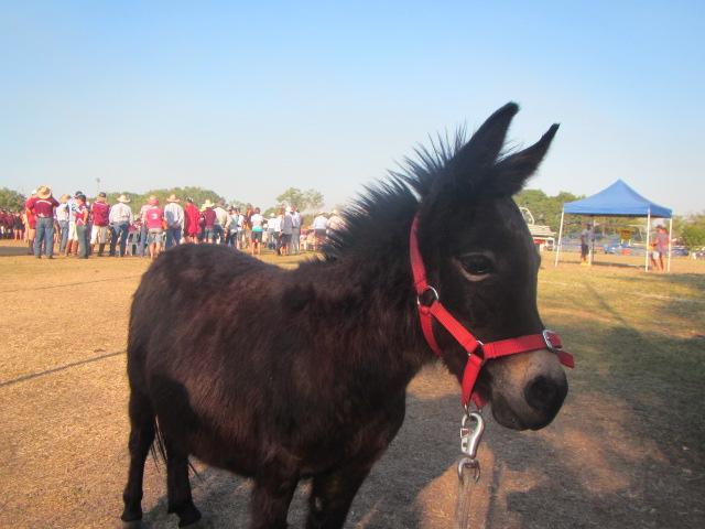 Mini Mule