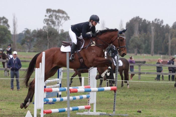 Quality young TB gelding