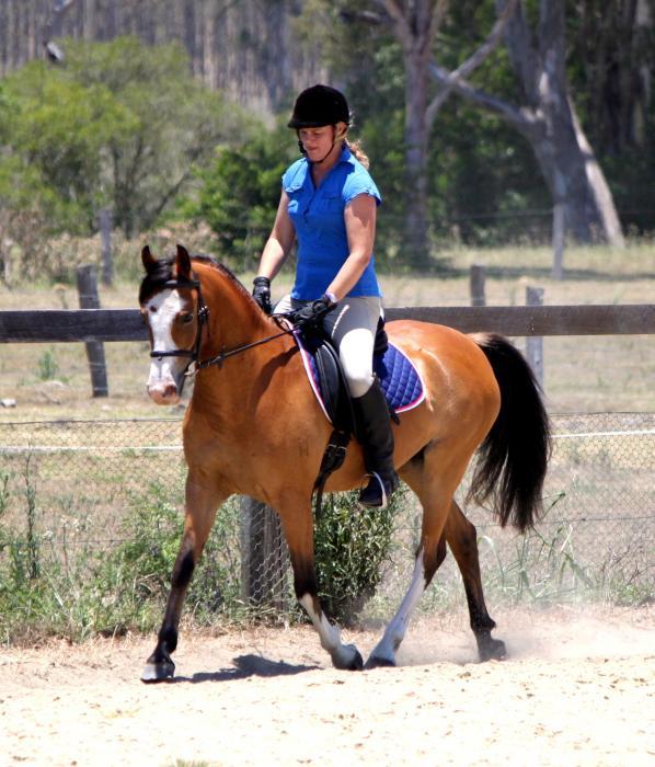 Part Welsh/Arabian Pony Mare