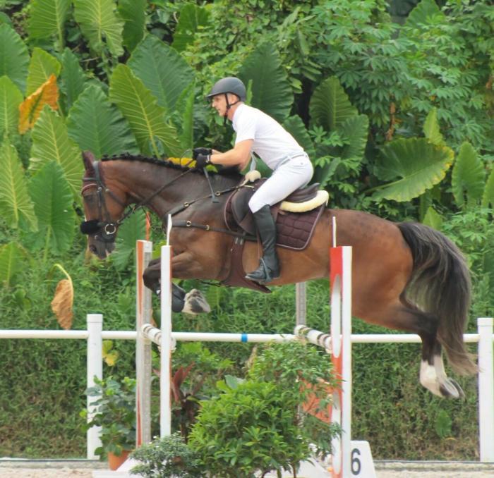 Super Junior Horse