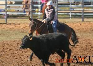 13 yr old ASH mare