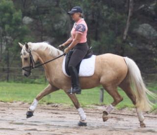 Dressage warmblood pony