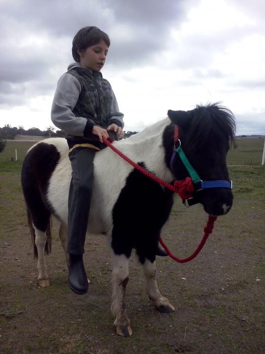 Childs quite miniture horse