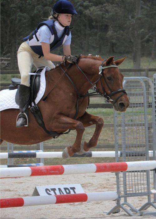 Wonderful Pony Club Mount