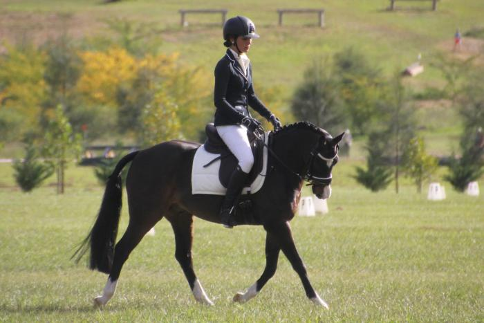 Performance Pony For Sale