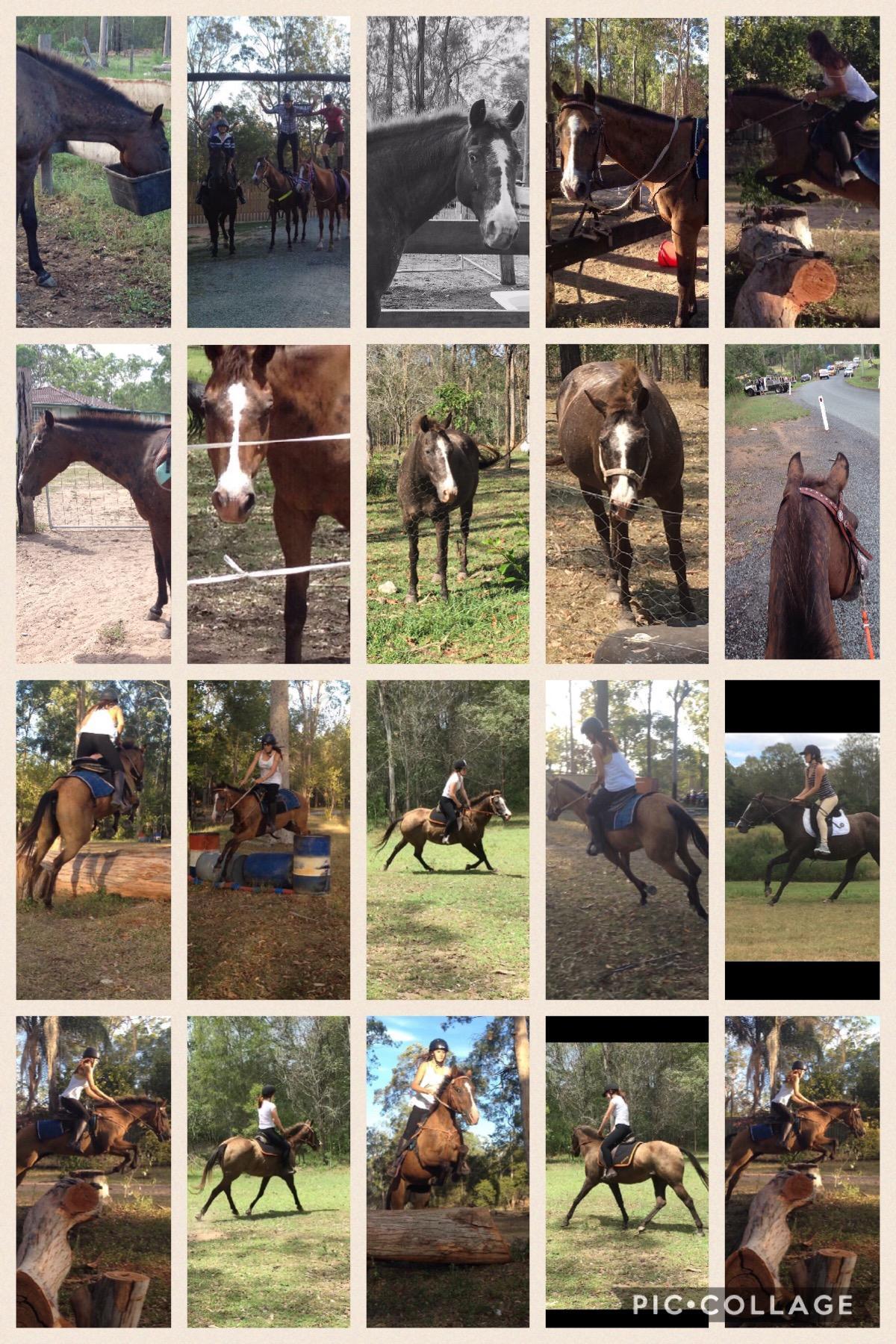 14yr old buckskin appy sporting mare