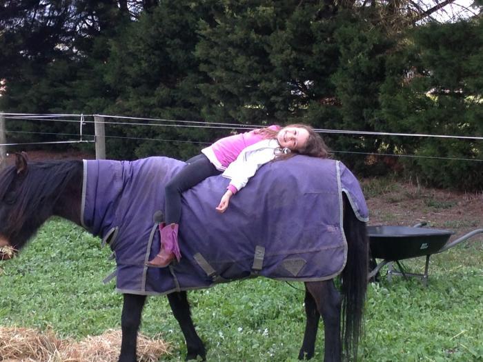 bombproof pony