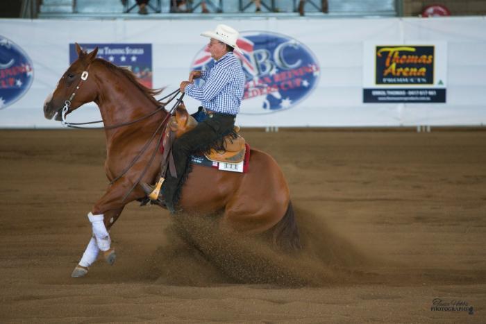 Exp.Q.Horse Reining Gelding/Ranch/West Dressage et