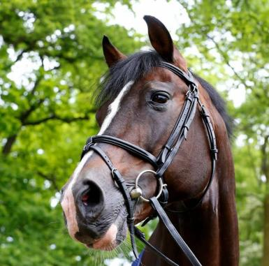 Sire Casall Ask, not just a pretty face