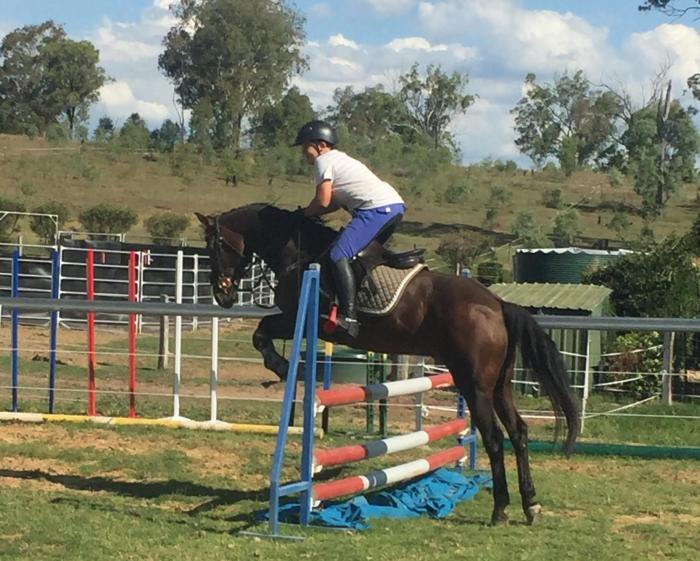 Ripper jumping / dressage pony