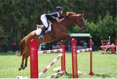 Competitive Showjumper