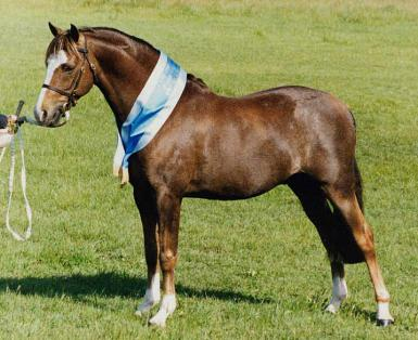Sire: Bamborough Jazzamataz