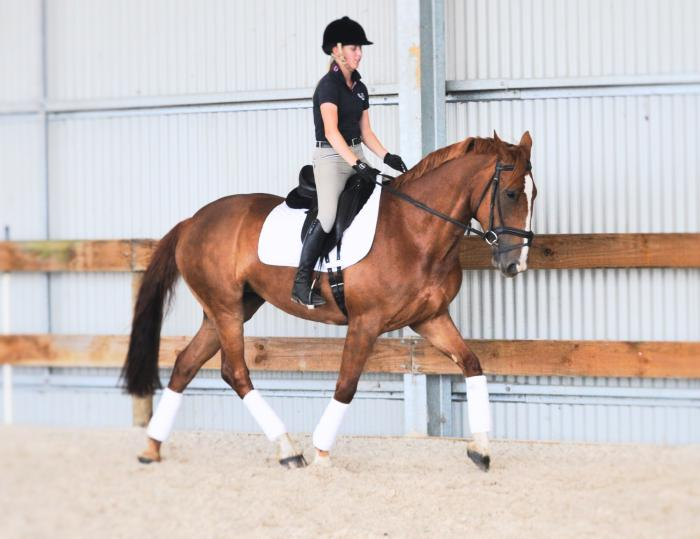 Talented and Safe Dressage/Alrounder