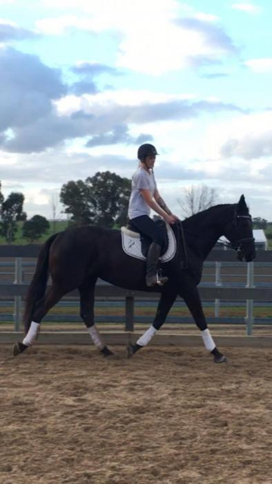 Stunning Warmblood Mare
