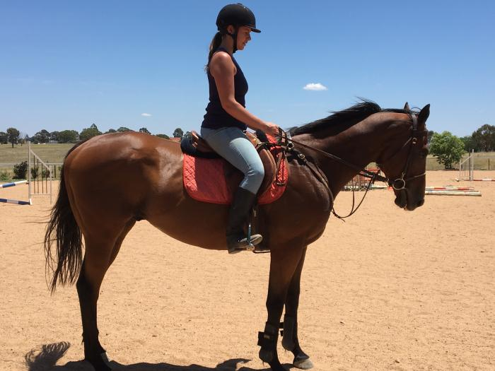 Lovely Project Horse