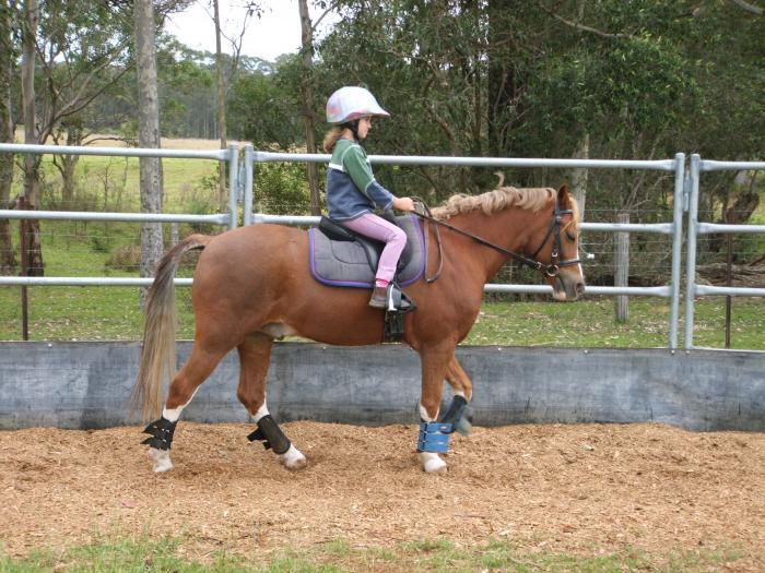 Beautiful Kids/Beginners Pony