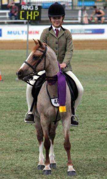 Champion Welsh under Saddle Brisbane Royal 2014