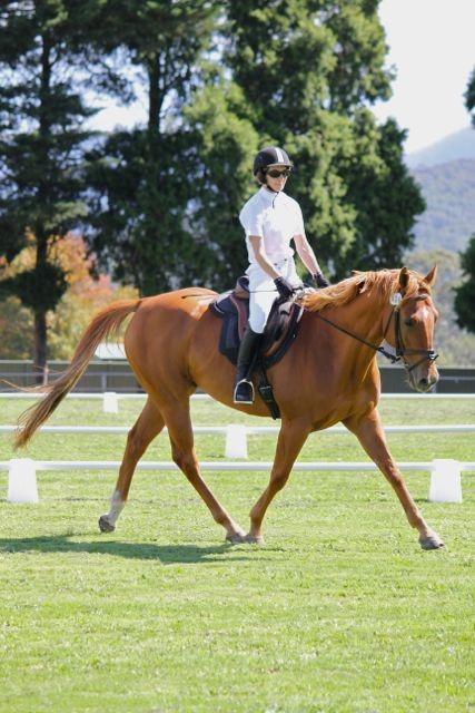 Affectionate Quarter Horse gelding