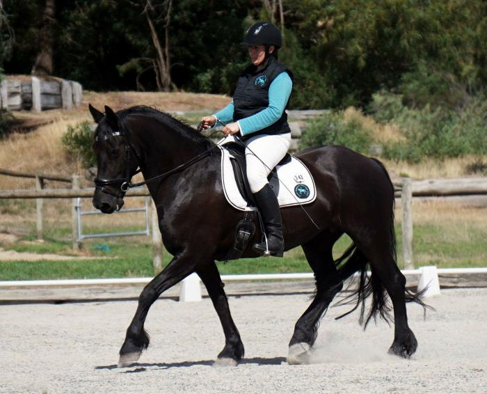 Lovely Purebred Friesian Mare