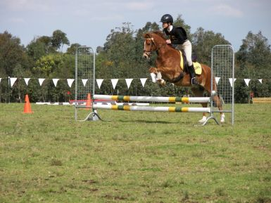 Billy Showjumping