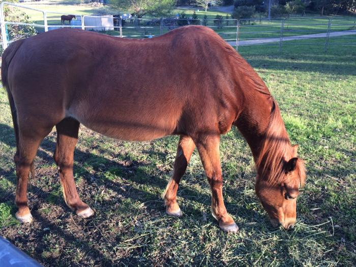 Loving Home Wanted for Pony