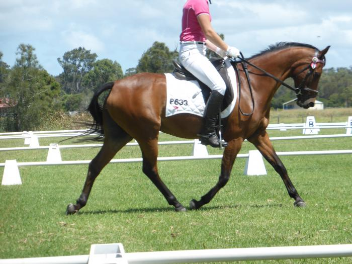 Dressage Riding Pony by Rothwell Toytown