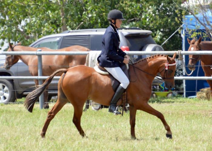 Quality Show/Dressage Pony-BRENTON PARK EPIC