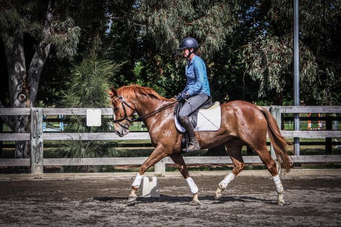 Well bred & Versatile Heritage Stockhorse