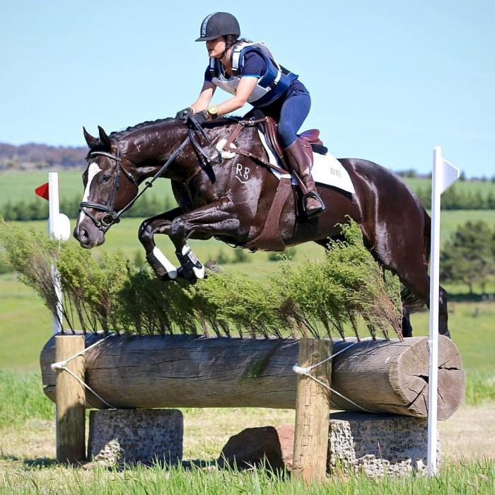 Stunning Eventing / Showjumping mare