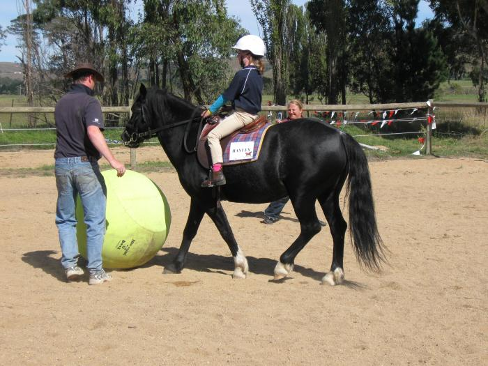 Welsh Cob Mare - Section D