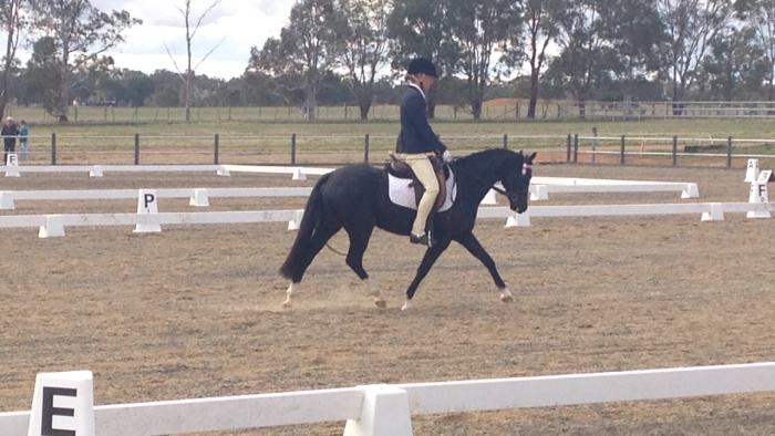 Stunning Dressage and Show Pony