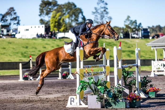 Competitive Young Rider Horse